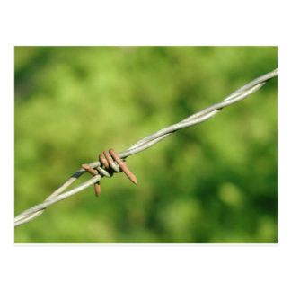 Barbed Wire, Barbed, Wire, Fencing Postcard