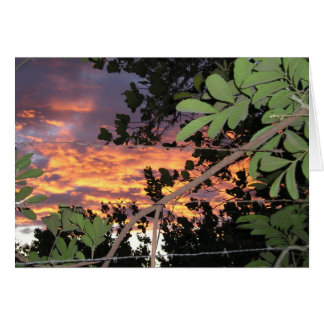Barbed Wire El Salvadoran Sunset Card
