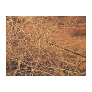 Barbed Wire in Tumbleweed Photography Wood Print