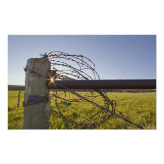 Barbed wire rolled up on fencerow near poster