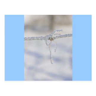 Barbed wire very iced with a little piece of fur postcard