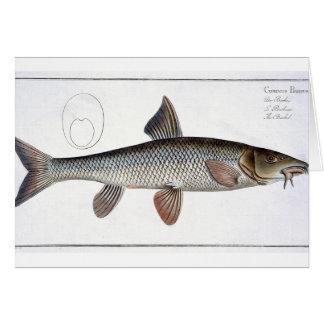 Barbel (Cyprinus Barbus) plate XVIII from 'Ichthyo Card