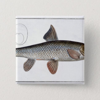 Barbel (Cyprinus Barbus) plate XVIII from 'Ichthyo Pinback Button
