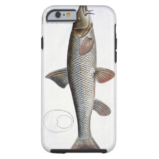 Barbel (Cyprinus Barbus) plate XVIII from 'Ichthyo Tough iPhone 6 Case