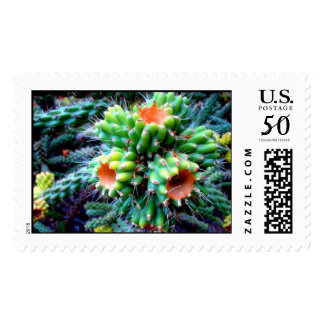 BARBELLE'S CACTUS.. POSTAGE
