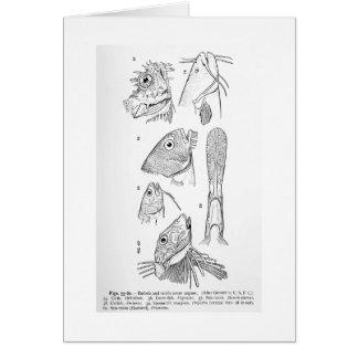 Barbels and tactile sense organs art card