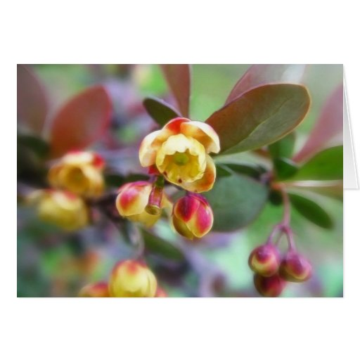 Barberry Flowers Card