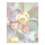 Barberry Flowers Personalized Letterhead