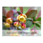 Barberry Flowers Post Card