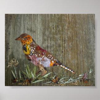Barbet Bird Poster