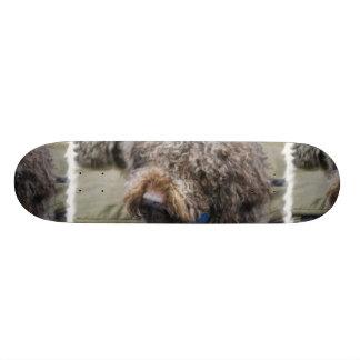Barbet Skateboard