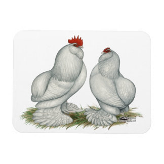Barbu d'Everberg Chickens Magnets