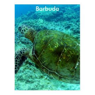 Barbuda Snorkeling Postcard