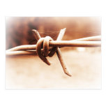 Barbwire and Spider Web in Sepia Postcards