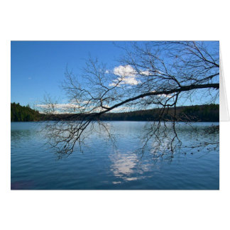 Bare Branch Over the Lake Card