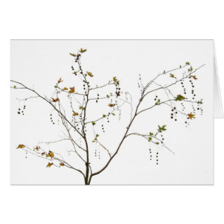 Bare Branched Tree Card