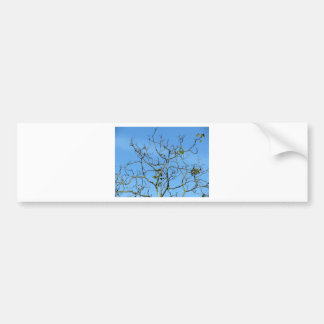 Bare chestnut tree in a sunny day car bumper sticker