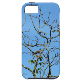 Bare chestnut tree in a sunny day iPhone 5 case