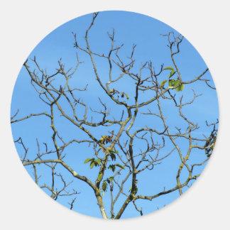 Bare chestnut tree in a sunny day classic round sticker