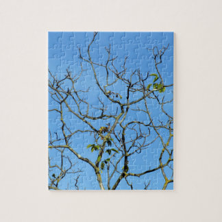 Bare chestnut tree in a sunny day jigsaw puzzle