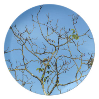 Bare chestnut tree in a sunny day dinner plates
