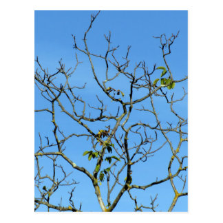Bare chestnut tree in a sunny day postcard