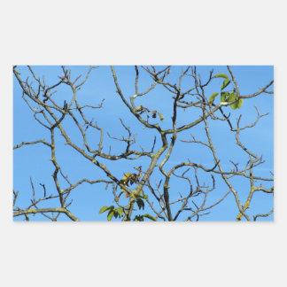 Bare chestnut tree in a sunny day rectangular sticker