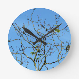 Bare chestnut tree in a sunny day round clock