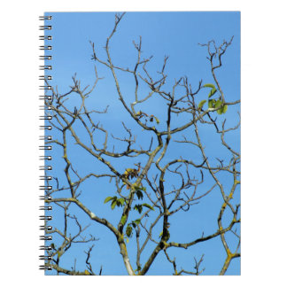 Bare chestnut tree in a sunny day spiral notebook