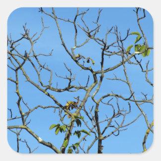 Bare chestnut tree in a sunny day square sticker
