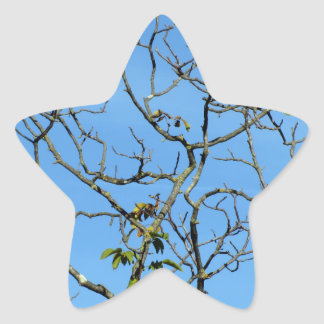 Bare chestnut tree in a sunny day star sticker