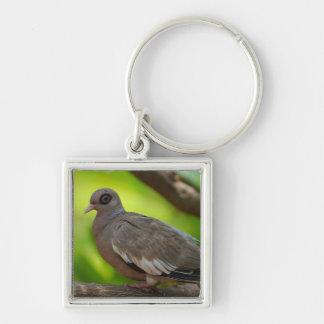 Bare Eyed Pigeon Key Chain