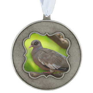Bare Eyed Pigeon Scalloped Ornament
