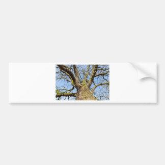 Bare leafless oak tree bottom view with blue sky i bumper sticker
