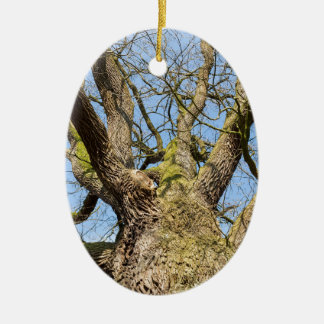 Bare leafless oak tree bottom view with blue sky i ceramic ornament