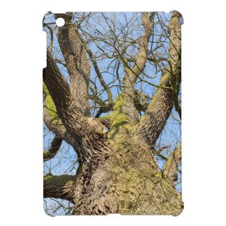 Bare leafless oak tree bottom view with blue sky i iPad mini cases