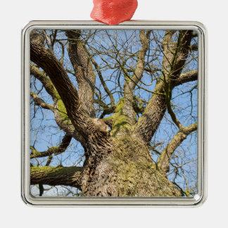 Bare leafless oak tree bottom view with blue sky i metal ornament