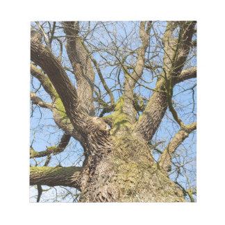 Bare leafless oak tree bottom view with blue sky i notepad