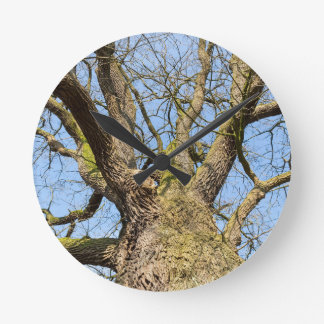 Bare leafless oak tree bottom view with blue sky i round clock