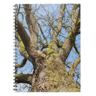 Bare leafless oak tree bottom view with blue sky i spiral notebook