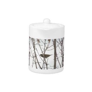 Bare Limb Bird teapot, by H.A.S. Arts Teapot
