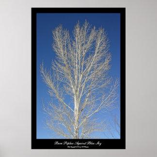 Bare Poplar Against Blue Sky Print