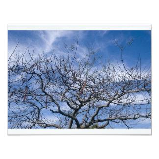 BARE TREE AND SKY CARD