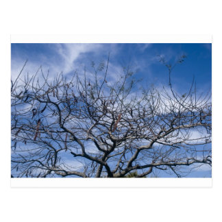 BARE TREE AND SKY POST CARDS