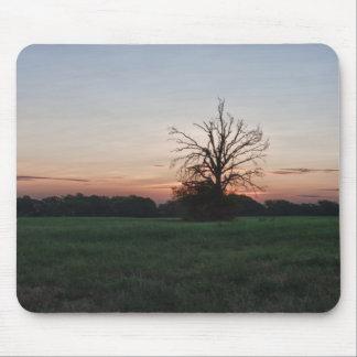 Bare Tree at Sunrise Mouse Pad