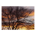 Bare Tree at Sunset Poster