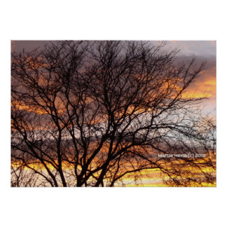 Bare Tree at Sunset Posters