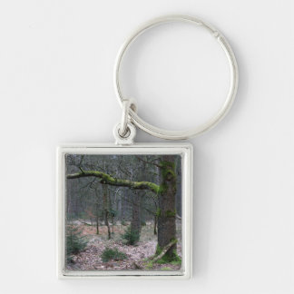 Bare tree in a forest key chain