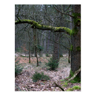 Bare tree in a forest postcard