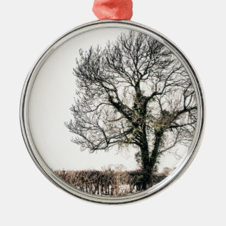 Bare Tree in the Snow Ornaments